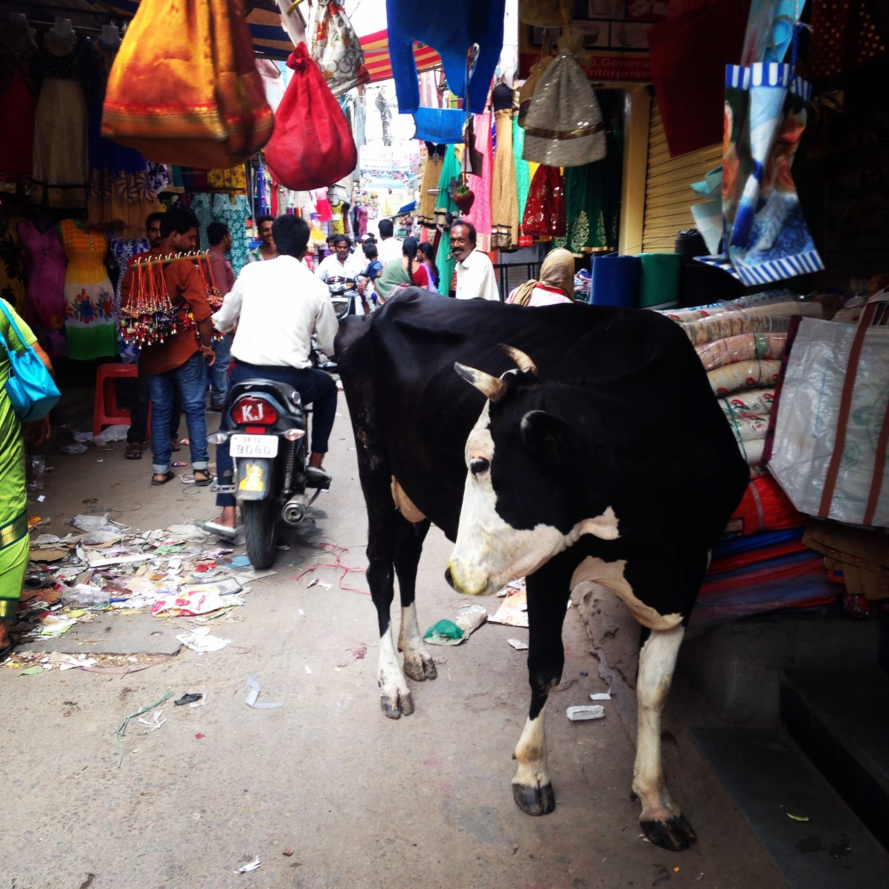 Cow in a market